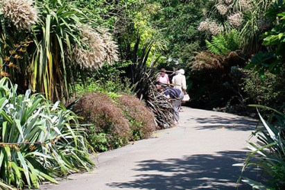 The original design of a sub-tropical garden divided by a series of curvilinear walks is still much in evidence today.