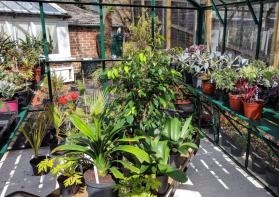 Plants 'hardening-off' in a cold greenhouse