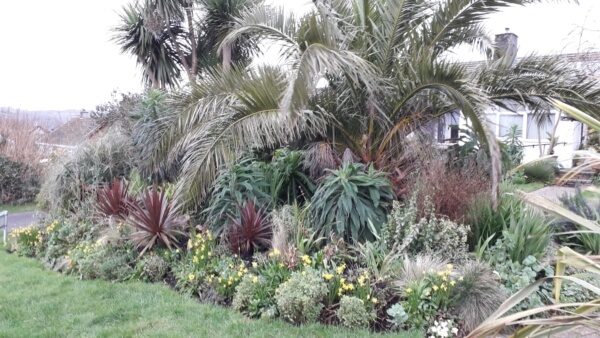 A palm provides the backdrop to a mixed border at Bleujyowa – Curious Plants