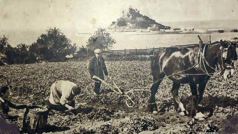 A photo, believed to be from the 1930s, showing three people working in Little Cliff fields, Trenow, probably harvesting potatoes. St Michael's Mount can be seen in the background.