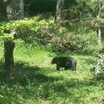 black beer in woods