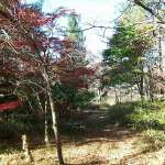 Willowwood trail with fall leaves