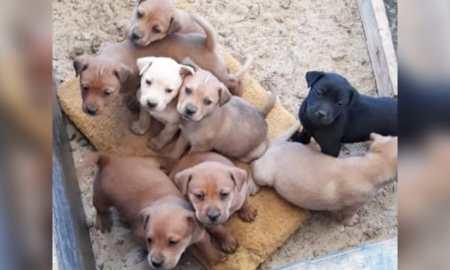 ONG Vida de Cão realiza castração social amanhã