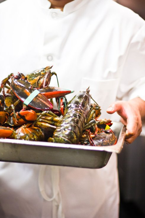 MORSO_IMG_0079_kitchen_lobster
