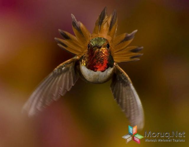 I'm In Charge! - 2013-11-03_227923_nature.jpg