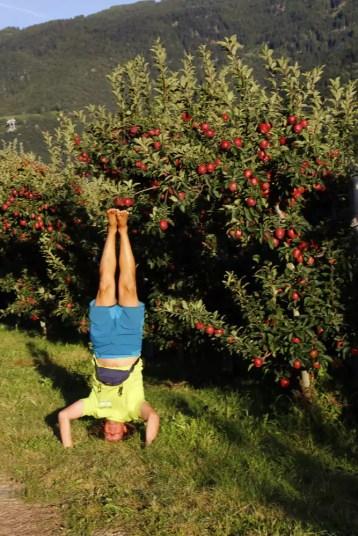 In den Apfelplantagen Südtirols