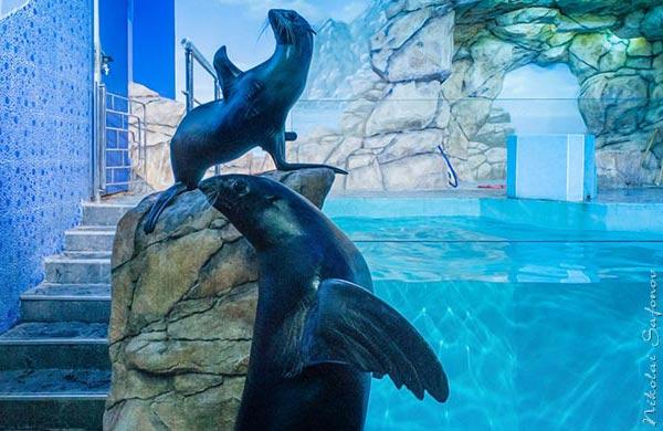 МОСАКВАРИУМ. Фото морских котиков в океанариуме
