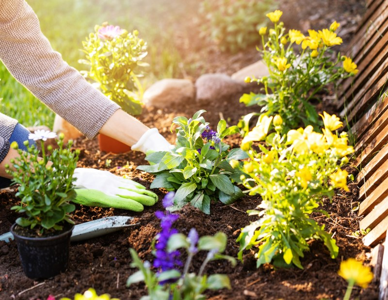 gardening without pesky mosquitoes