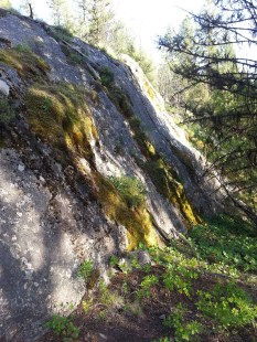 Moss on bonnie rock 2