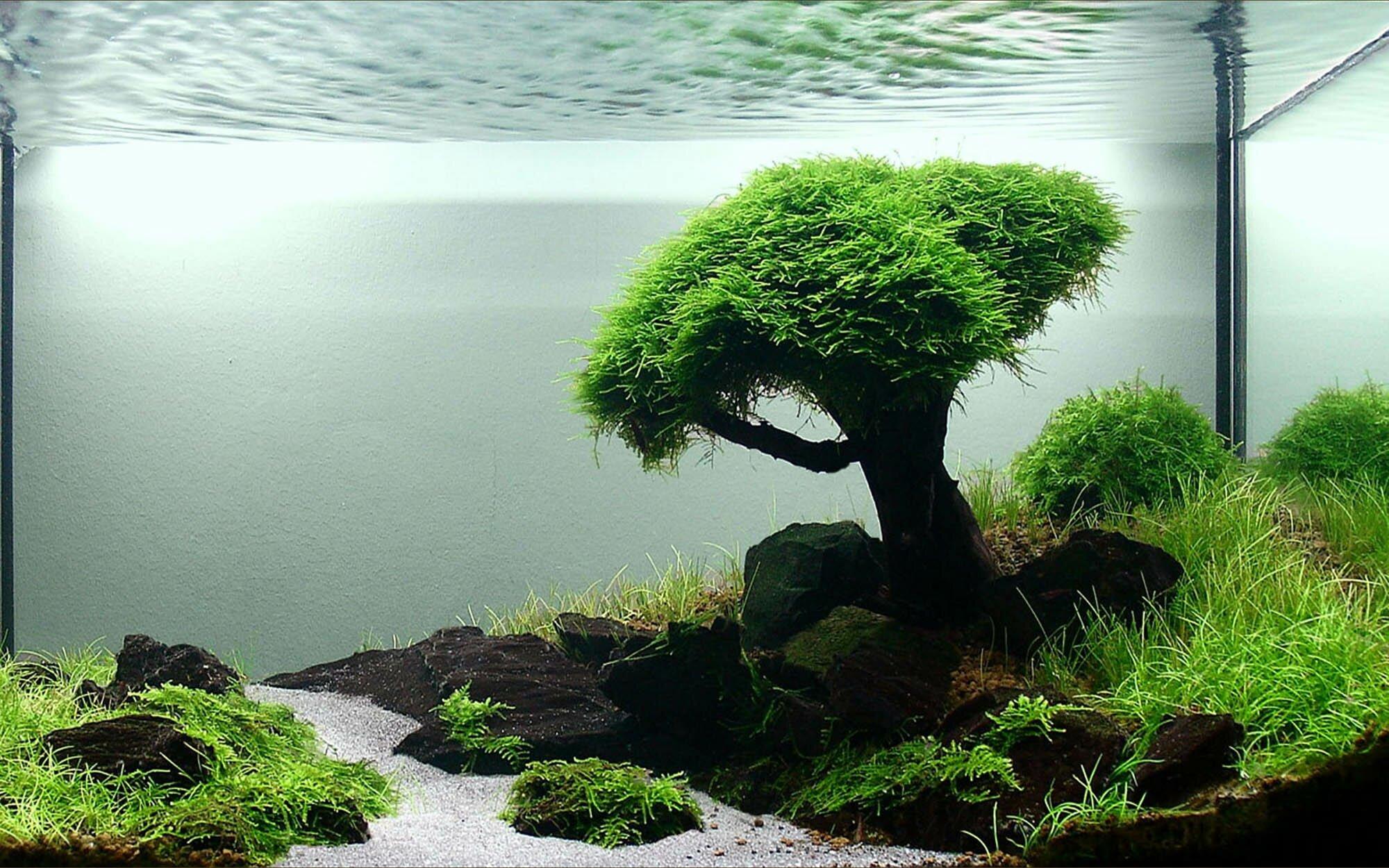 Easy Floating Aquarium Plants