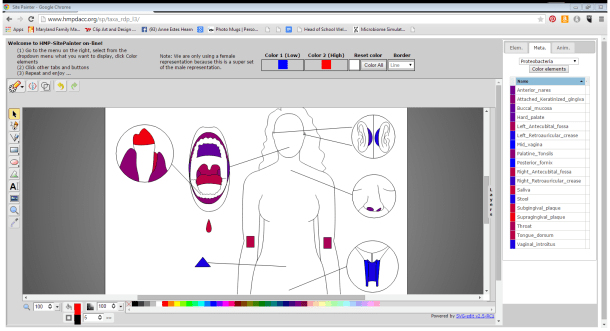 Figure 4. SitePainter screenshot of Phylum (level 3) classification of Proteobacteria on the human body.