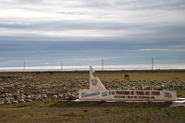 Tierra del Fuego welcoming flock. Or goodbye flock in my case.