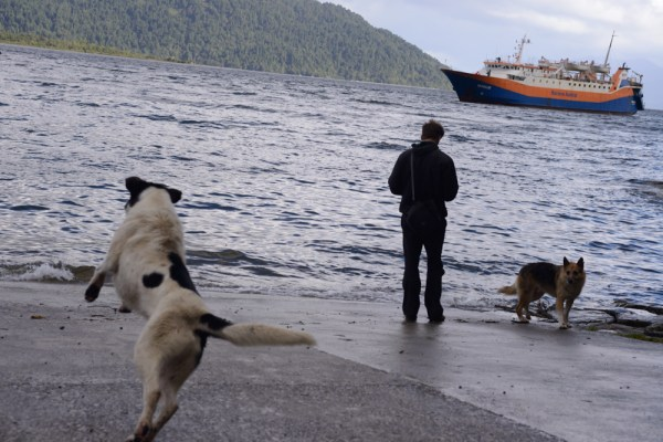 Local dogs await the incoming ferry