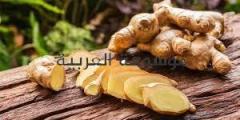 الزنجبيل لفقدان الوزن والسمنة المفرطه