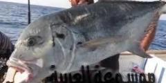 مقالة هامة عن مهارات الصيد فى البحر الأحمر