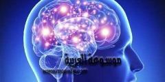 معلومات غريبة عن الهرمونات .. عجائب عن الهرمونات داخل جسم الإنسان