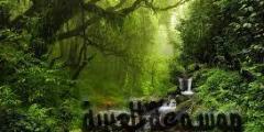 أجمل وأغرب حيوانات غابات الأمازون