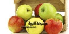 معلومات عن شجرة التفاح