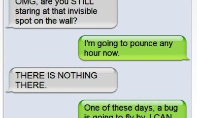 Funny Texts from Cats