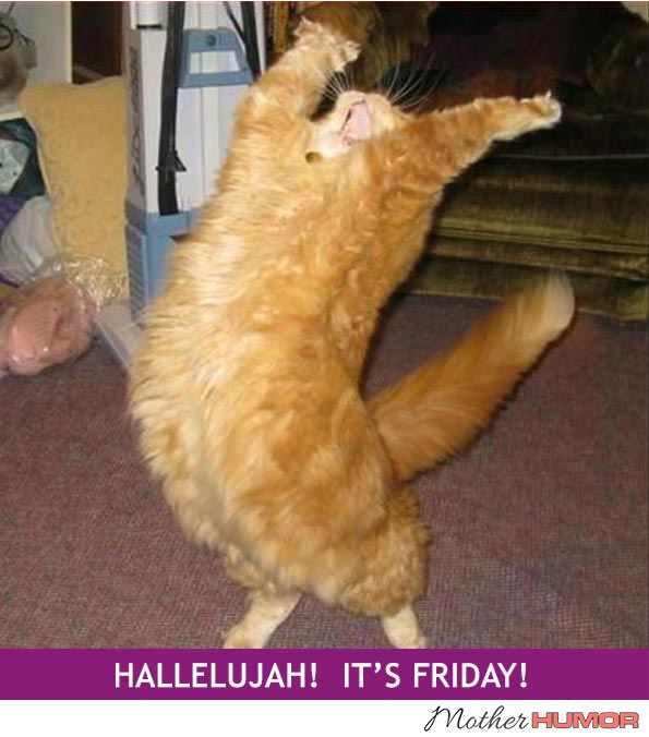 Funny picture of cat dancing