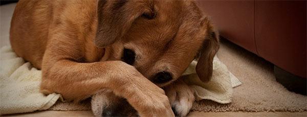 ashamed-dog-mother-humor