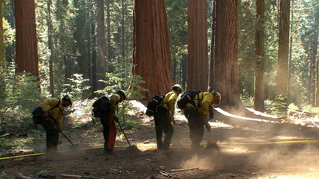 USDA/Flickr photo via Mother Jones: A National Park Service fire crew builds a sprinkler system around a grove of sequoias. USDA/Flickr