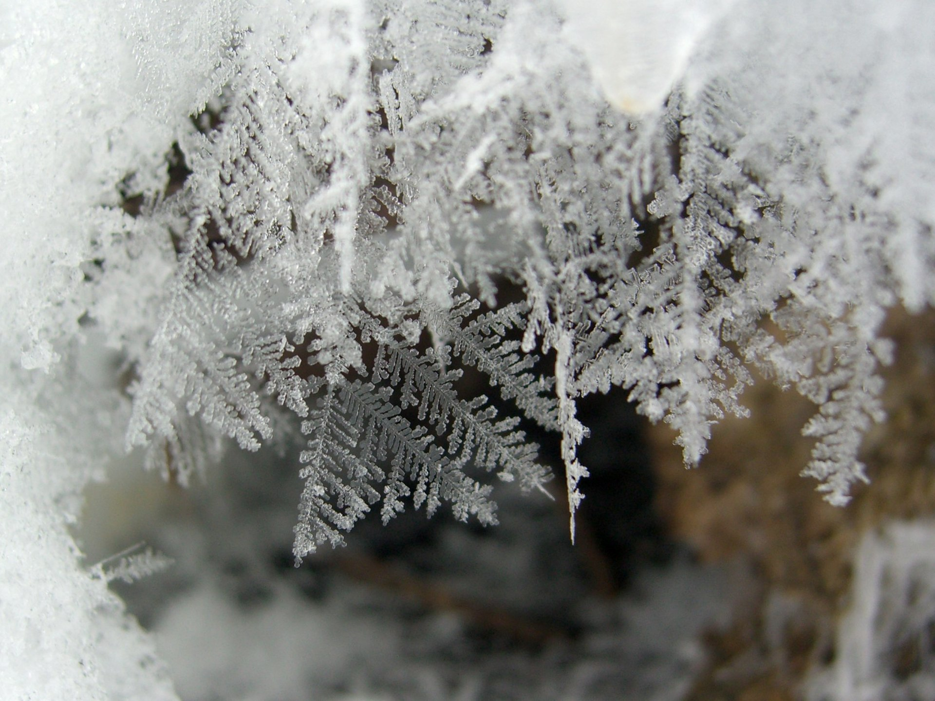 1920px-Feathery_Snow_Crystals_(2217830221)