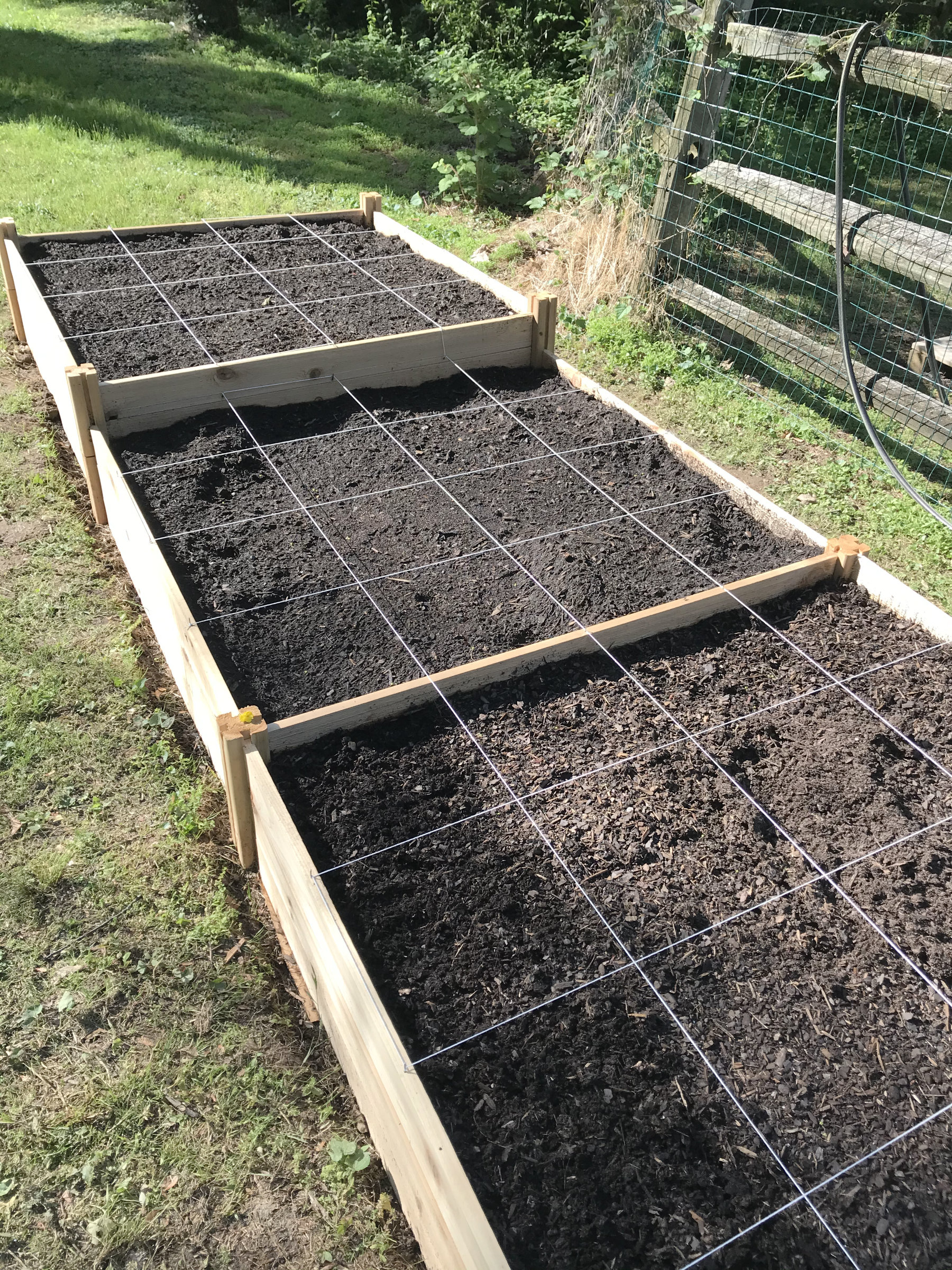our organic square foot garden with string