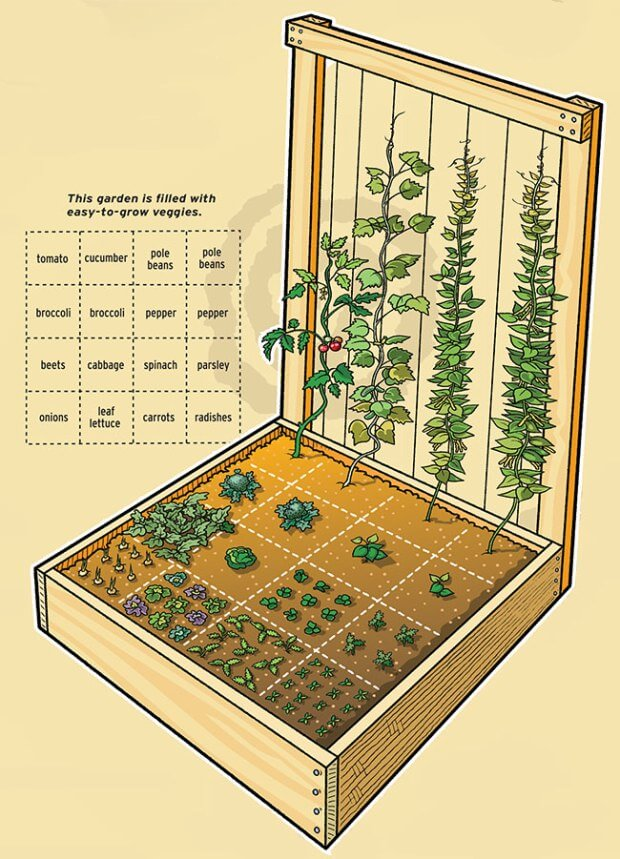square foot gardening llustration trellis