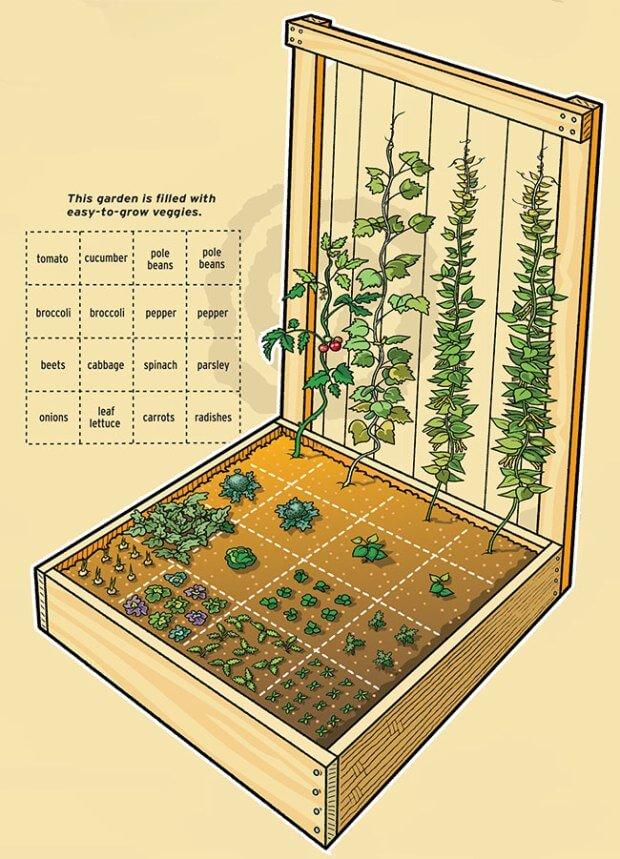 square foot gardening llustration trellis
