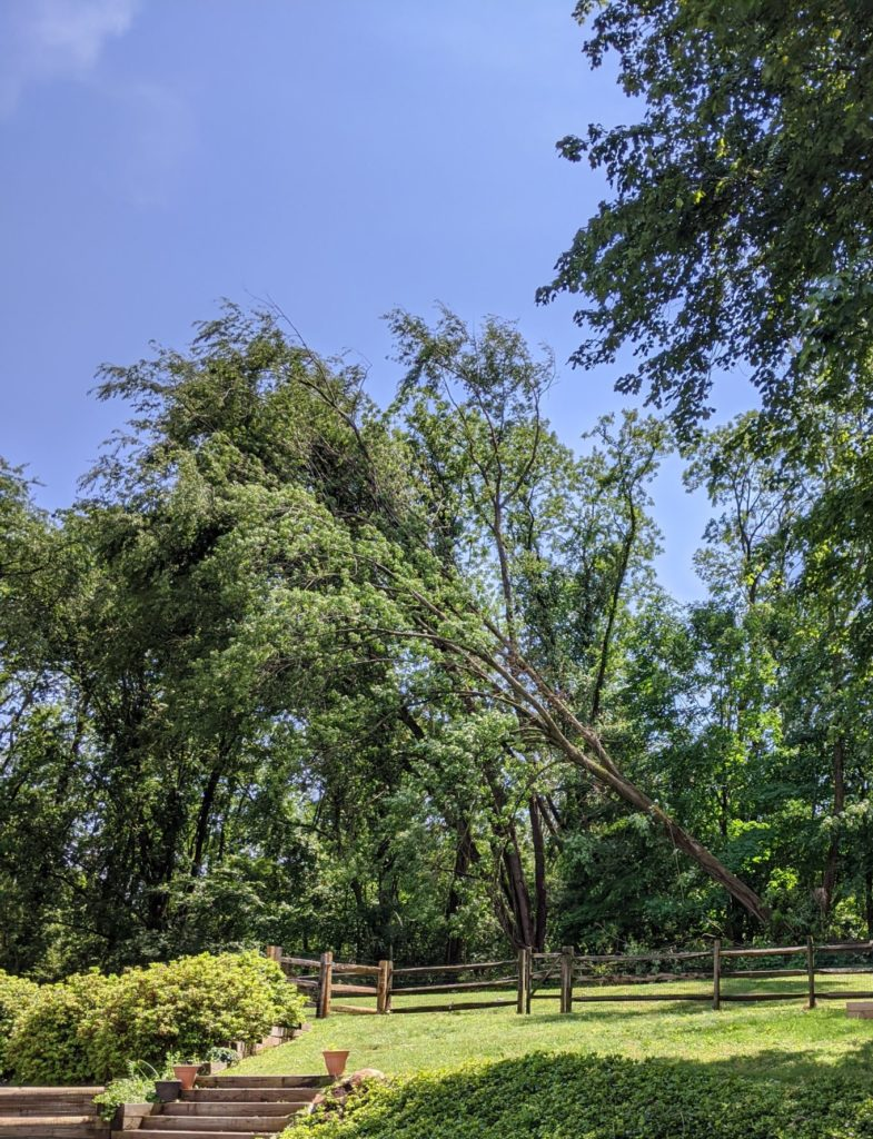 tree falling in backyard derecho
