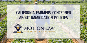 Farmers ask the government to allow undocumented immigrants to work