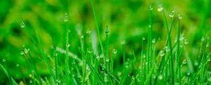 gras_groeit-niet-door-er-aan-te-trekken