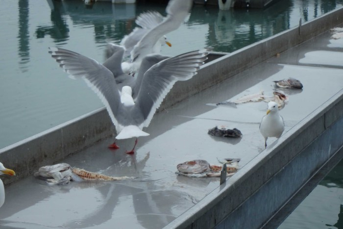 The seagulls get fed too