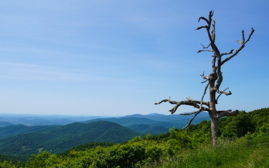 Someone told me to do the Skyline Drive so I did this instead of following the dirt roads on the TAT