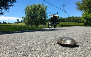 A little turtle was enjoying the sun in the middle of a backroad