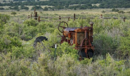 Old school tractor hidden in the bushes