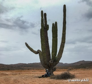The Cactus in Baja are HUGE