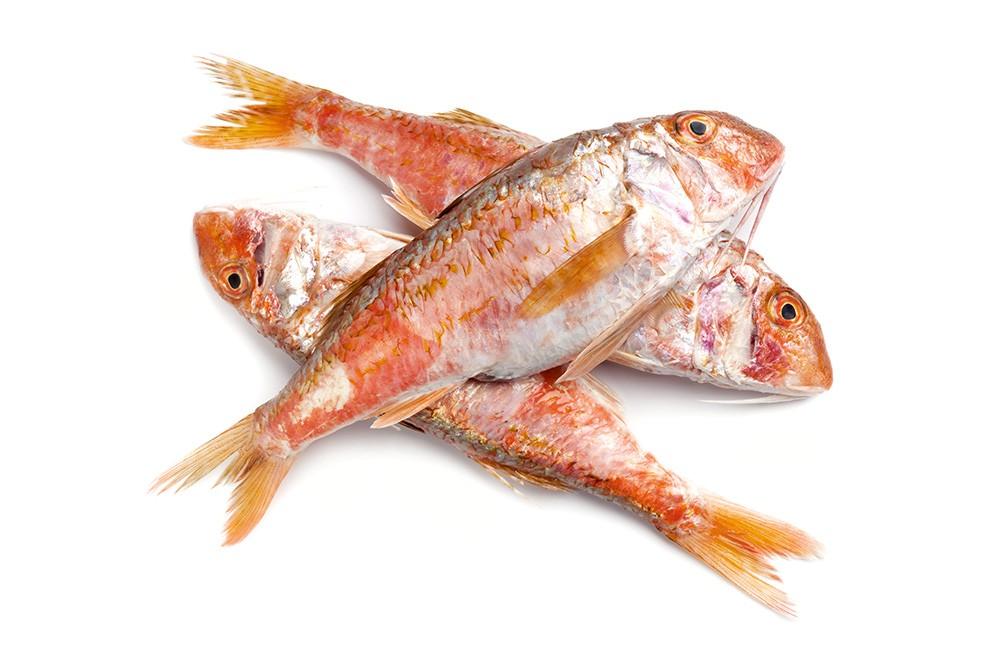 Barbunya Balığı