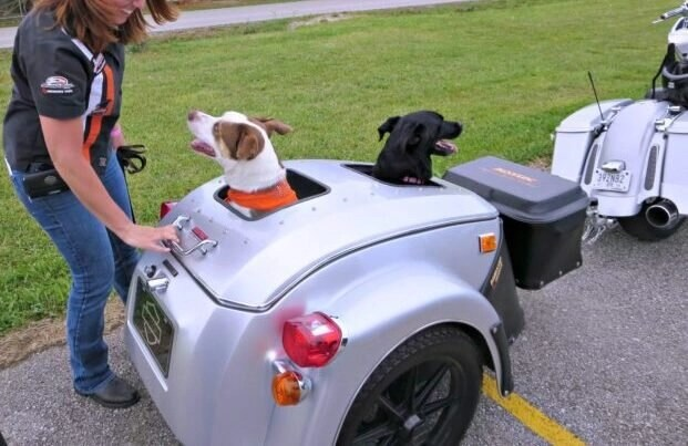 dogs in motorcycle trailer