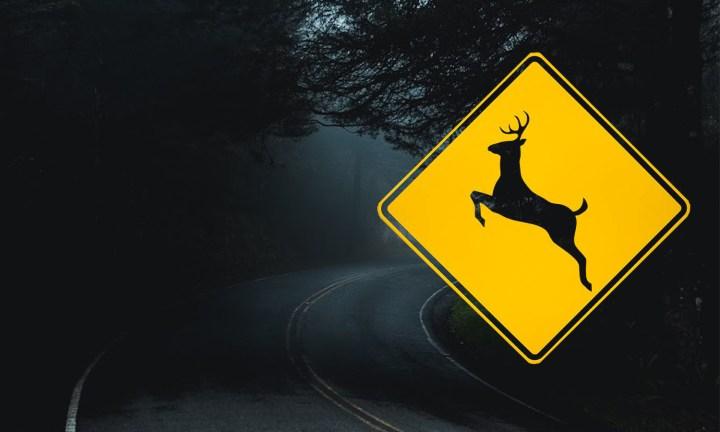 animal collisions