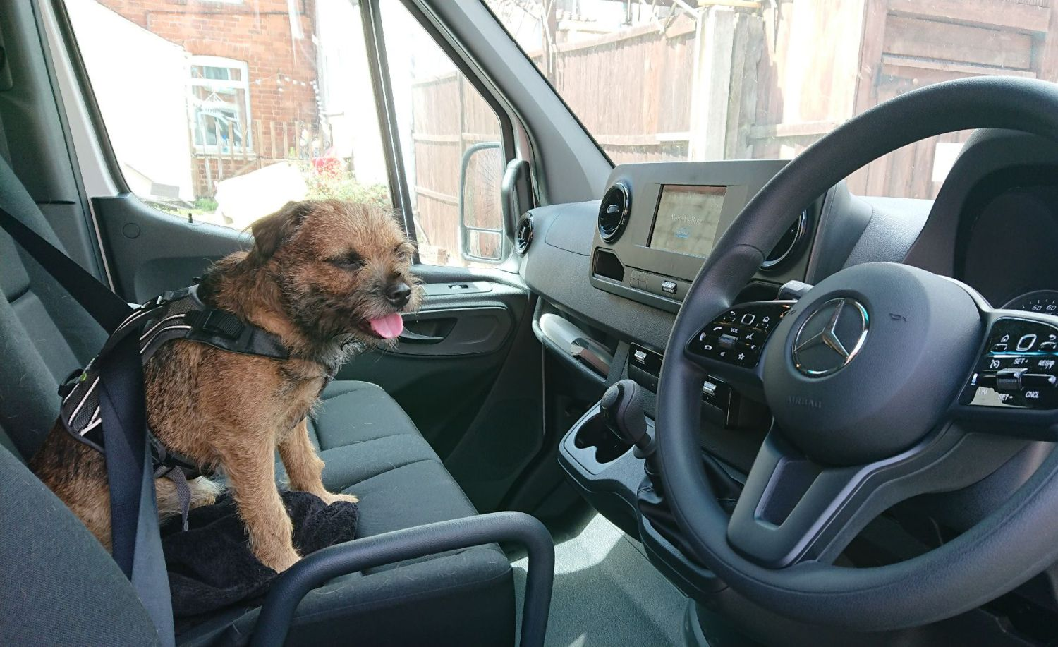 Van men take dogs along for the ride