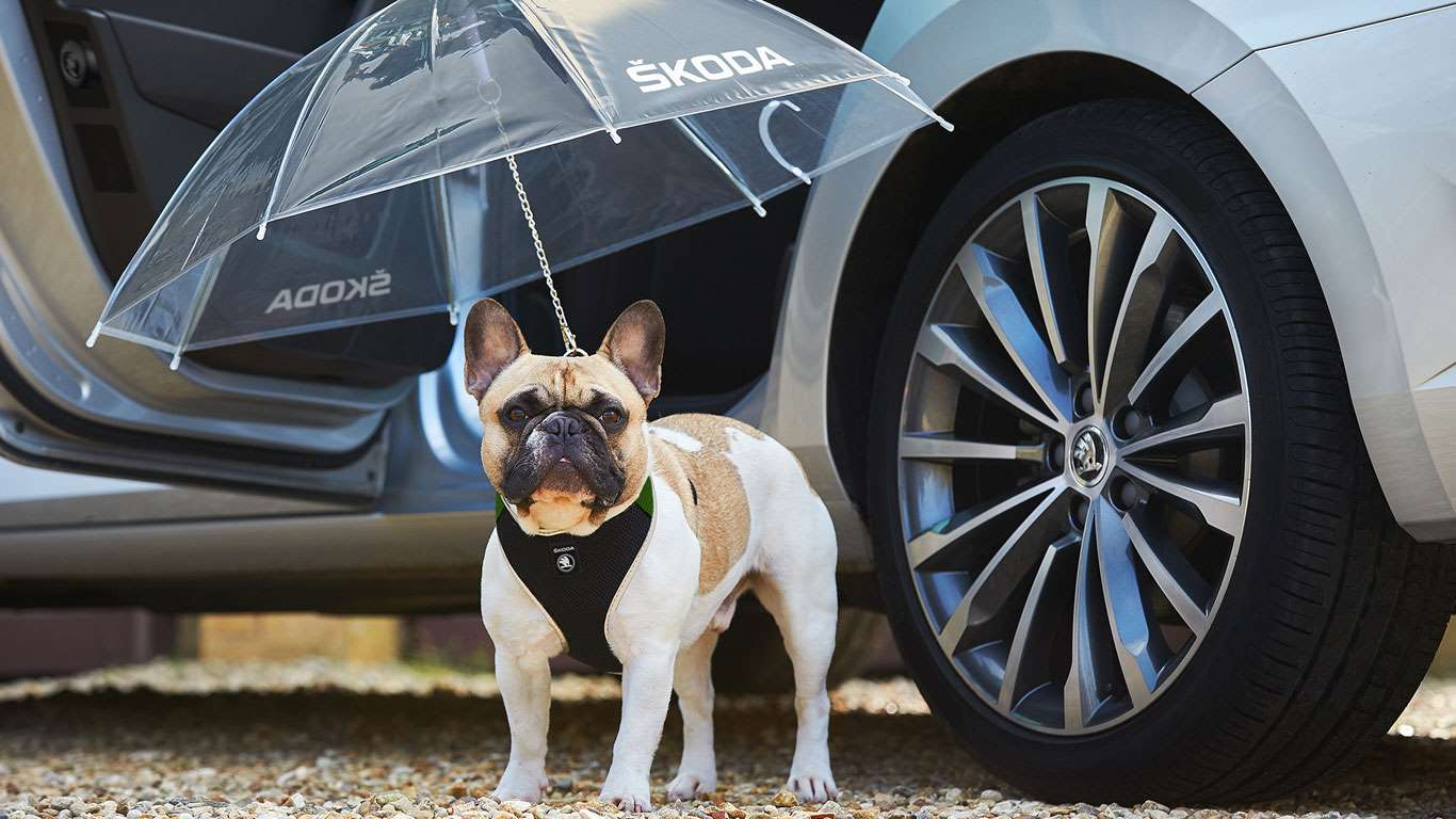 Skoda Simply Clever dog umbrella