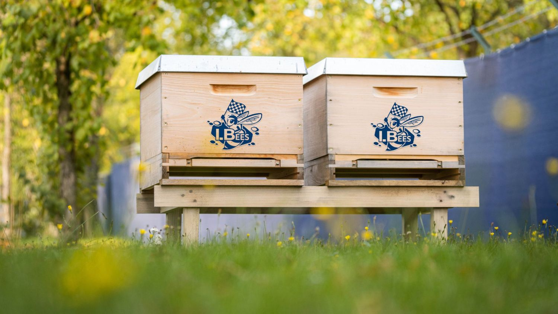 Volkswagen Motorsport bee hive