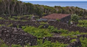 pico_island_vineyard_culture_trekking