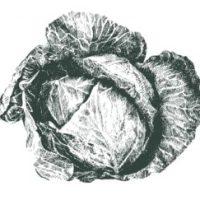 Coco-bel-œil [kòkòblëil]