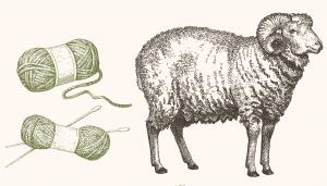 Fig. A. Mérinos à poils laineux.