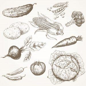 Fig. A. Légumes du jardin sur lesquels le chien a pissé.