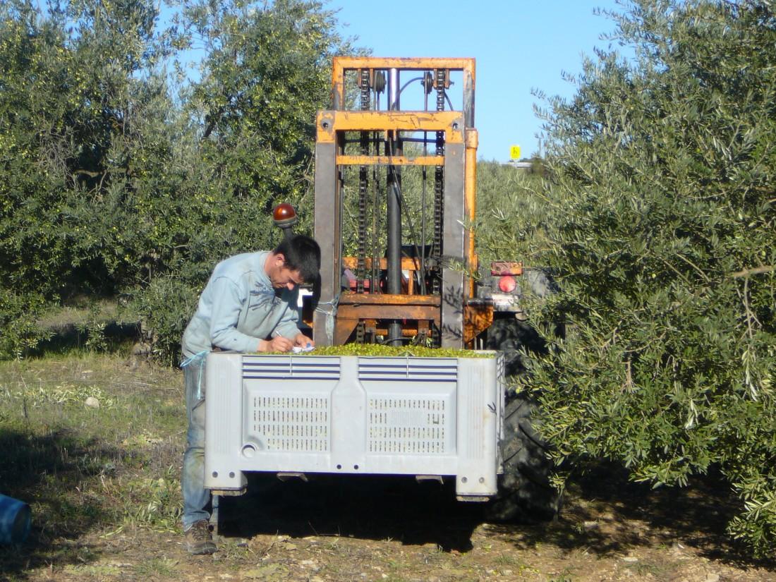 la tracabilite des olives