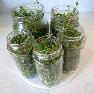 pickled Thyme – 700 grs –